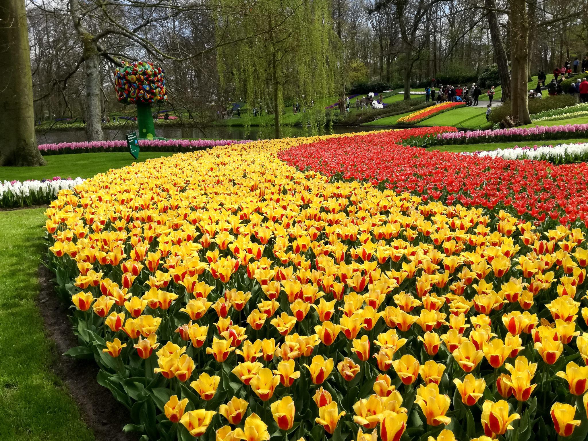 Keukenhof, primăvara eternă a sufletului meu